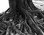 Wacky GMAT Roots, Continued …